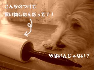 20051124131118.jpg