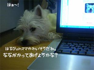 20051201174644.jpg