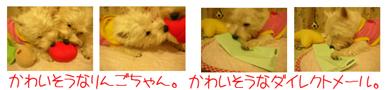 20060117202713.jpg