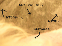 20060118171845.jpg