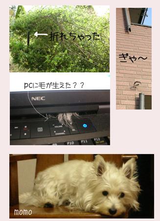 20060424180823.jpg