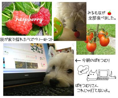 20060801155322.jpg