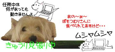 20060810180936.jpg