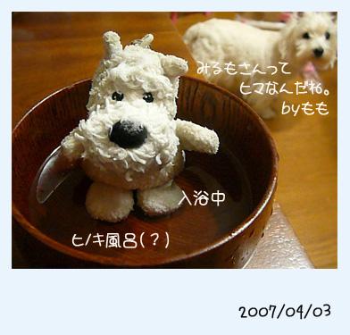 20070403232259.jpg