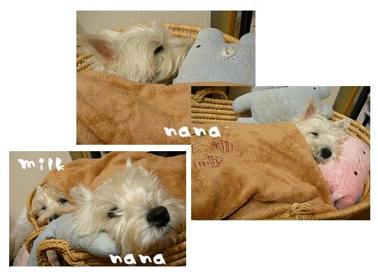 nana&みるく