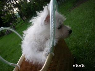 nana8.jpg