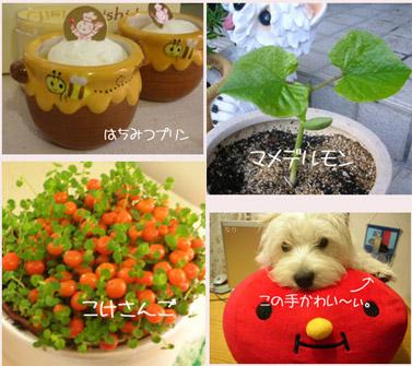 tomato..jpg