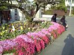 きれいな正門横の花壇