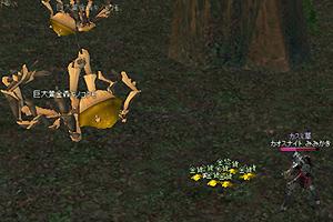 巨大黄金森キノコクモ