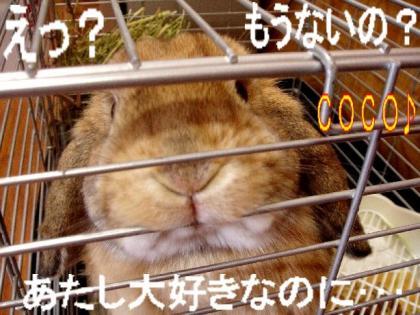 20070801174208.jpg