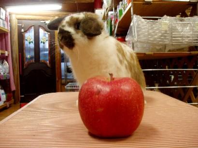 ♪りんごと