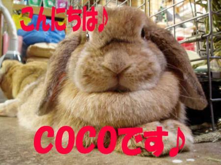 COCO ごあいさつ