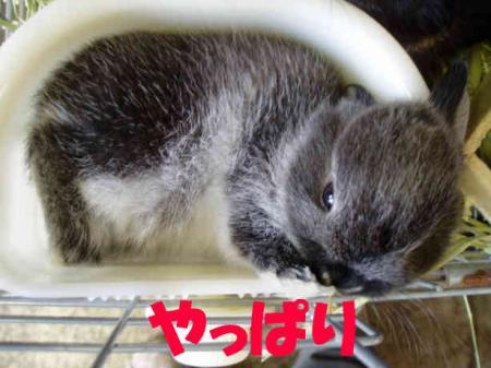 あさ 子供紹介  9