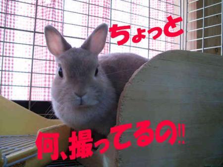 きら (2)