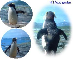 新江ノ島水族館(いわとびペンギン)