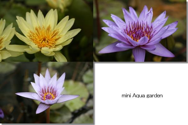 20081025_03.jpg