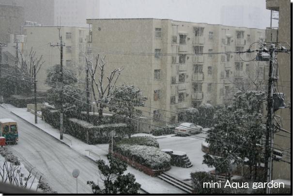 snow080203.jpg