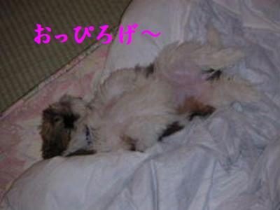 20070301231858.jpg