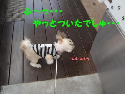 20070521211502.jpg