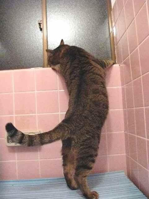 お風呂からパトロール