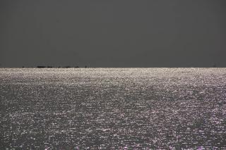 20080122 和田長浜