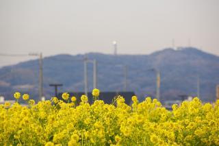 20080219 ソレイユの丘