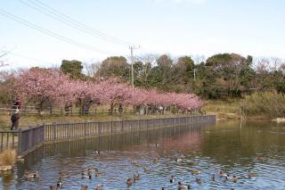 20080306 小松ヶ池