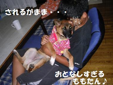 おとなしいももたん☆