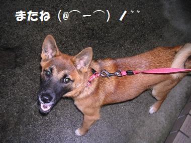 ★⌒(●ゝω・)ノ~☆βyё-βyё