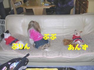 20051208165532.jpg