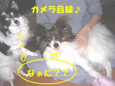 20070705091432.jpg