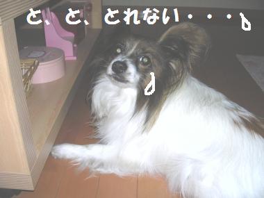 20070714233219.jpg