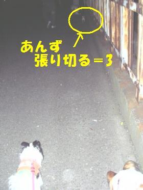 20071107231358.jpg