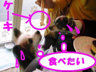 20071116_DSCN0324.jpg