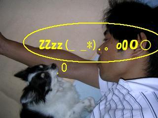 zzz(-ω-*)。oO