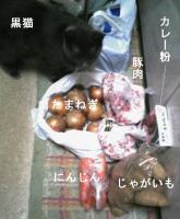 猫カレー材料
