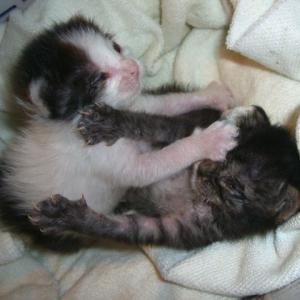 猫カウンターパンチ