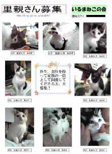 いるま猫ポスター