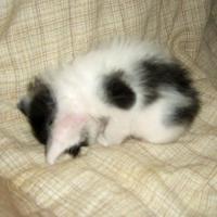可愛い寝姿