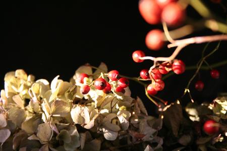 冬の午後/野薔薇(ノイバラ)紫陽花