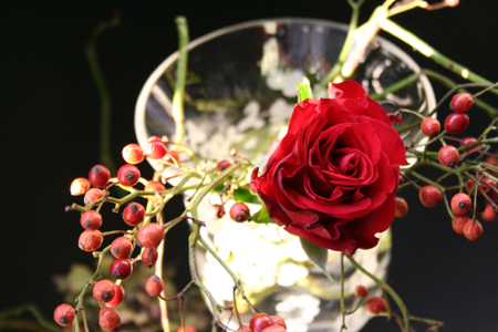 赤い薔薇 そして野薔薇(ノイバラ)