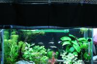 水槽のカーテン