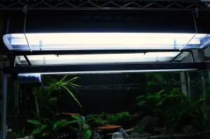 コリ水槽も光量UP!