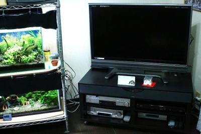テレビと水槽の位置関係
