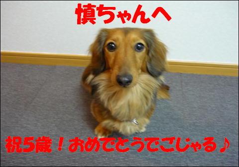 慎ちゃん5