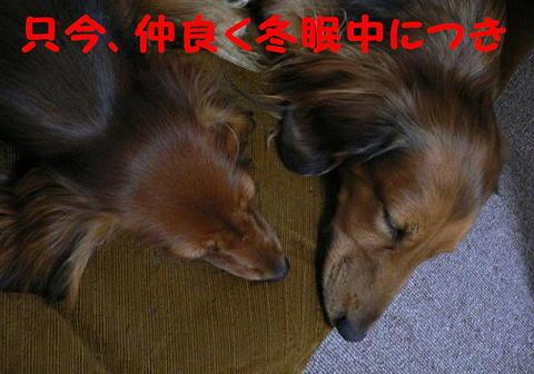 toumin2.jpg