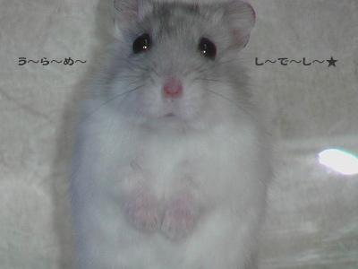 ichi_060324-1.jpg