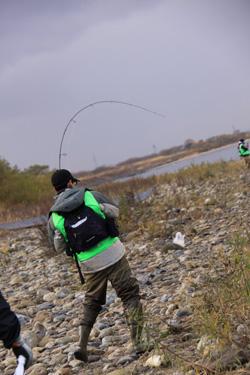 いそべ食堂 荒川 鮭さけ釣り