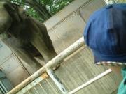 象との出会い