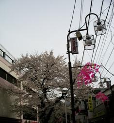 CherryHigashiNakano_0401.jpg